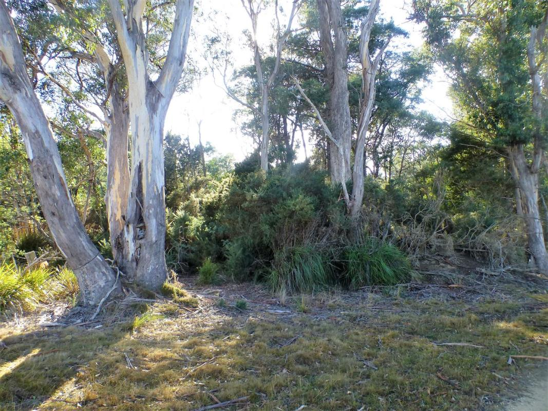 lot-1-link-road-beaconsfield-7270-tas